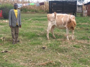 Robert and the cow the Hollands purchased for him using dollars earned through Kat's art