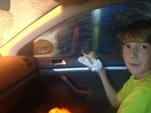 Gus in Car 10801993_10152610586594652_1842713820656244942_n