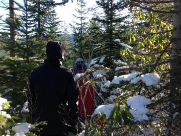 walking woods 2015 tree